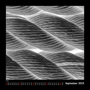 BlackAndWhite 2019 - 09_September (c)decoDesign-peters