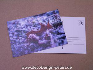 Eingefroren (c)decoDesign-peters.de