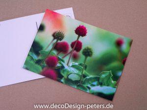 Hartriegel (c)decoDesign-peters.de