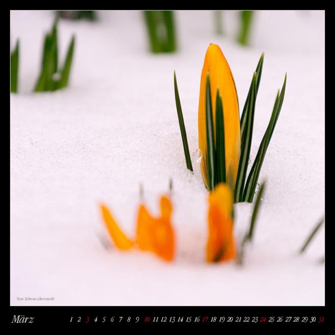 Kalender Auf Streifzug - März (c) decoDesign-peters