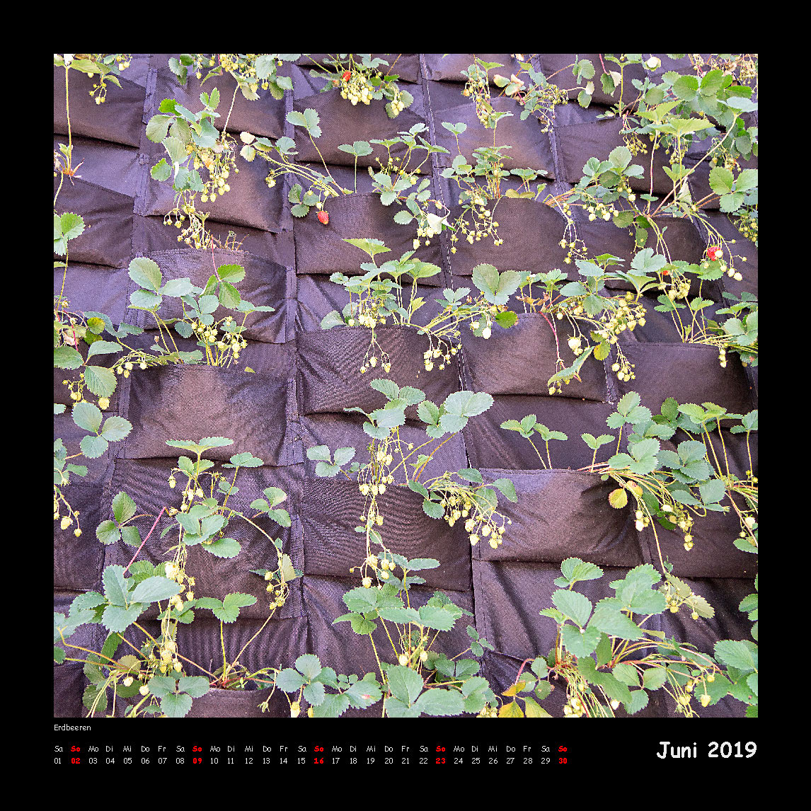 Kalender Quadraturen 2019 - Juni (c)decoDesign-peters
